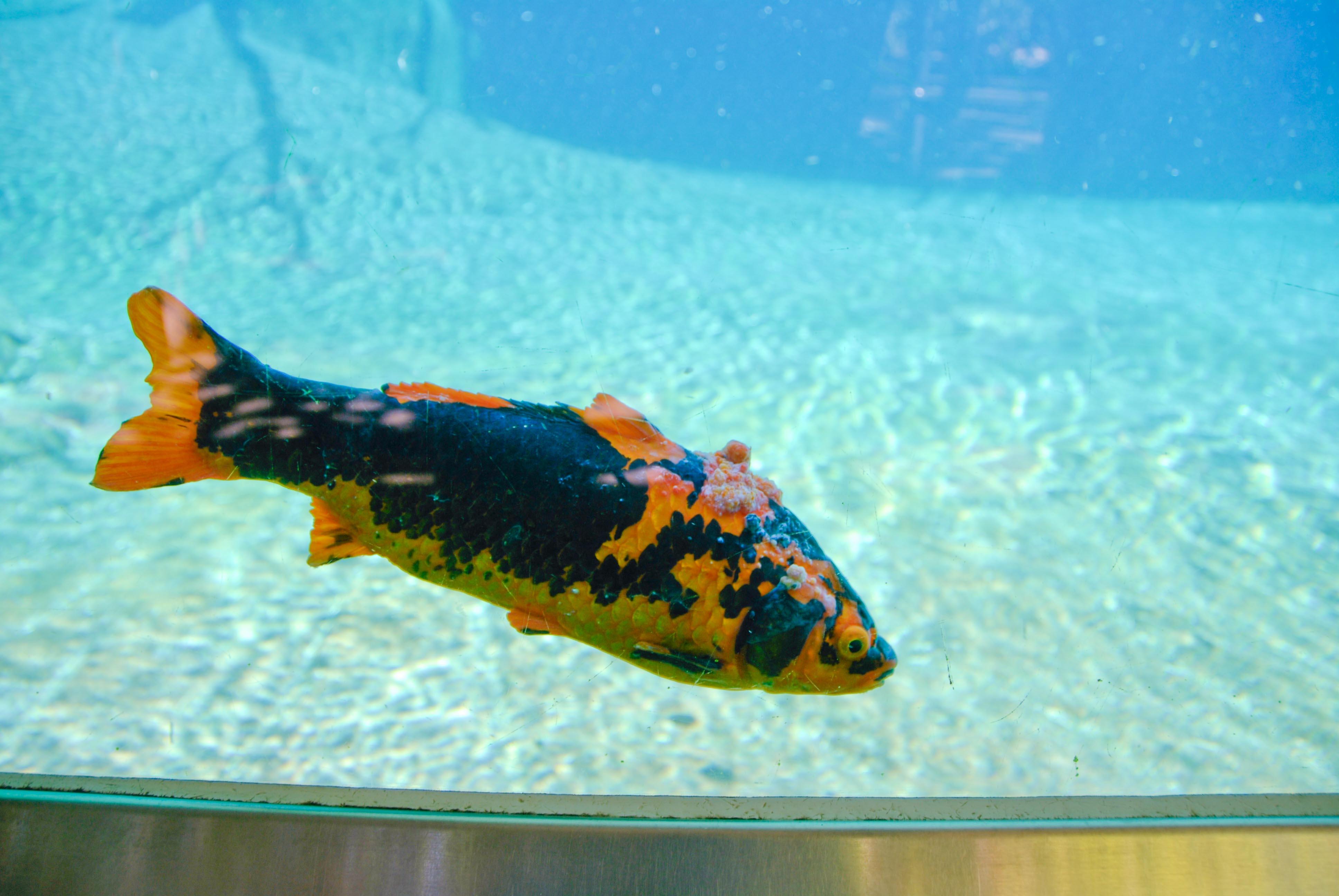 Fish aquarium in jeddah - _dsc7171