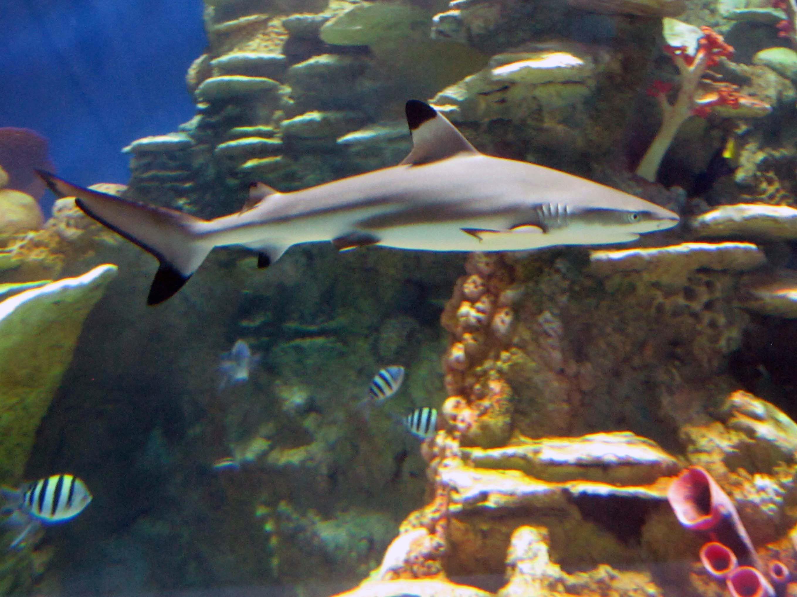 Fish aquarium in jeddah - Aquarium