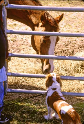 2455 02 Nellie horse