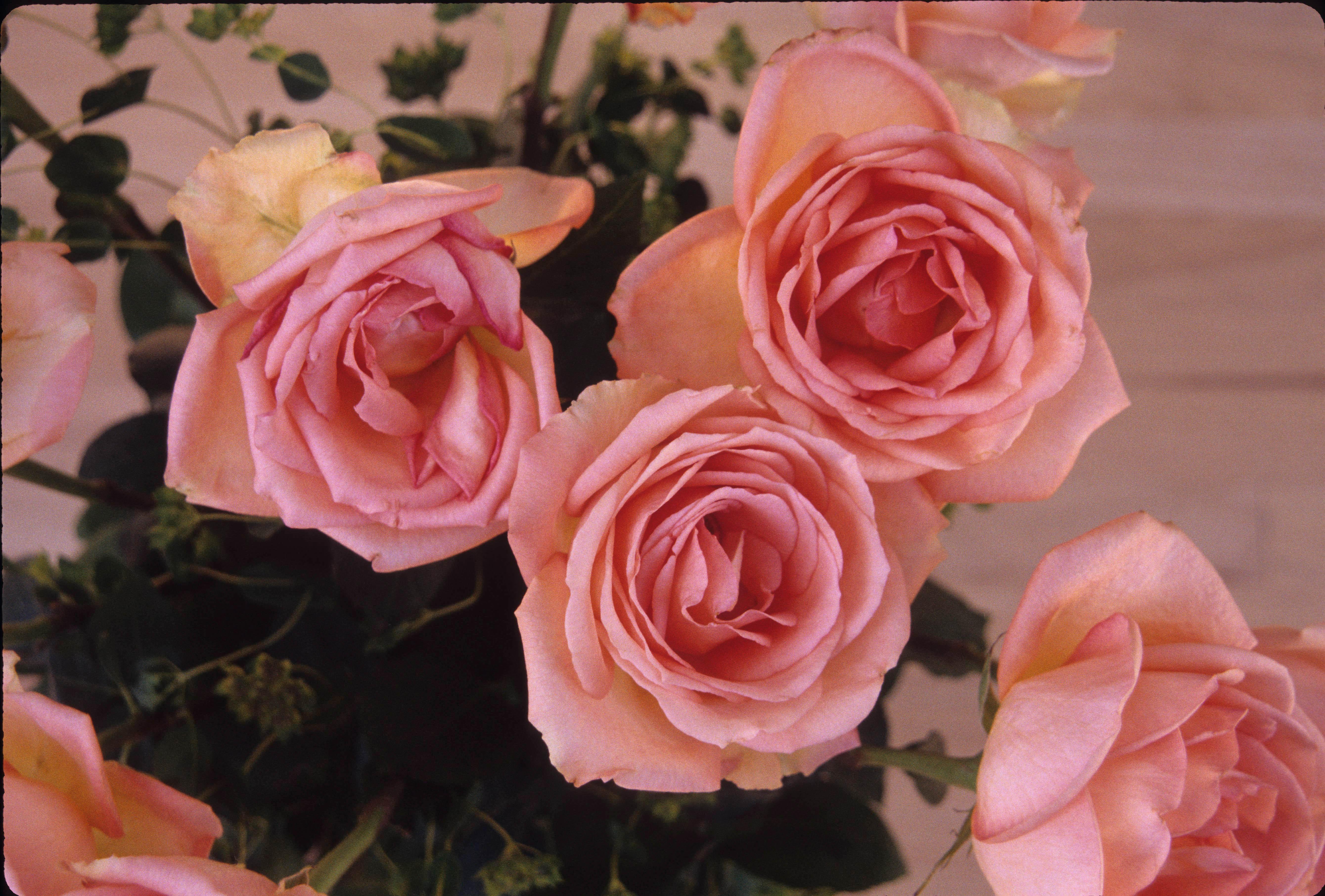 2993 28 Rose