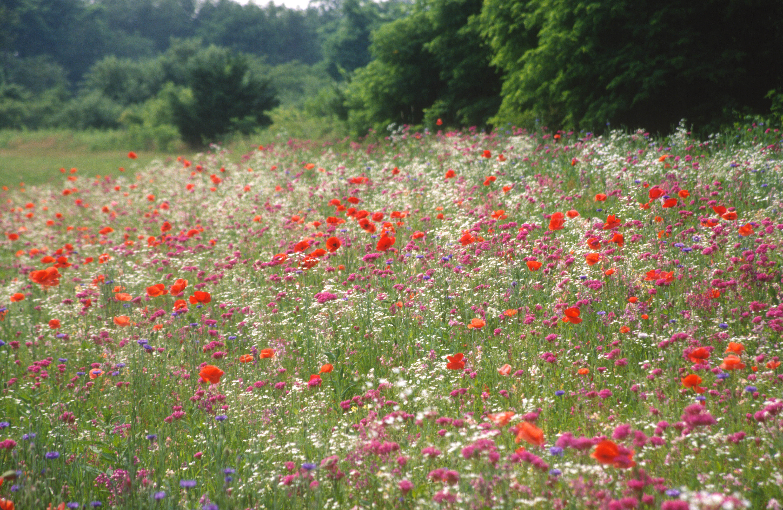 2491 26 Wildflowers